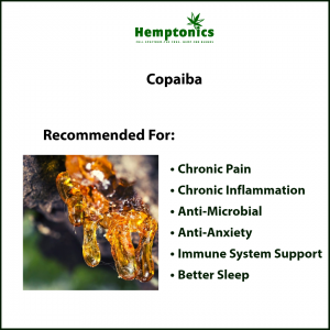 The Benefits of Pure Copaiba